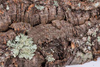 Raw bark
